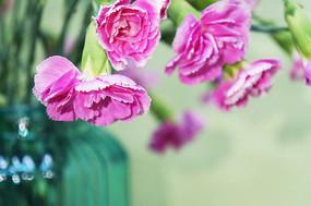 鲜花背景图