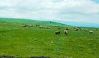 喀拉峻草原美景
