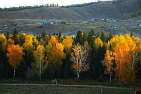 新疆白哈巴白桦林秋季风光摄影
