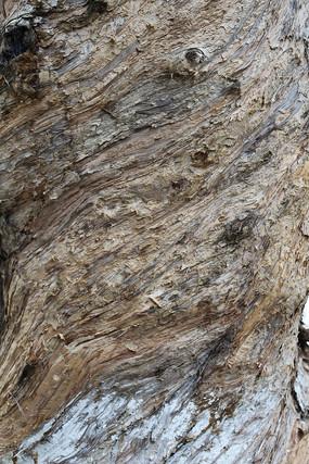 白千层树纹理