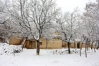 冬天的农村小院