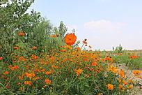 橙色花朵花丛