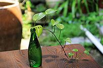 酒瓶中的植物