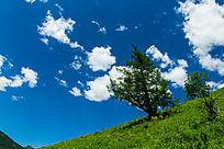 天空大草原风景图