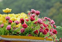 塑料手工花卉艺术花海图片