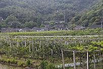 原生态山村