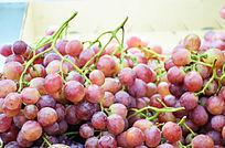 紫色红提水果摄影图