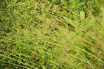 被风吹过的草地