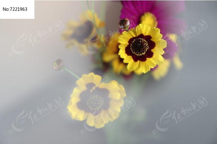 黄色小野菊清新素材图片