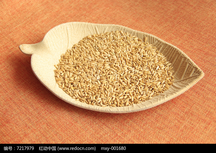 粮食燕麦图片