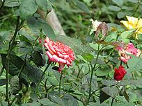 小红花摄影