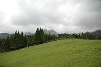 新疆石河子东大塘草原牧场云杉雪山
