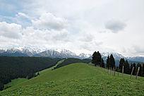 新疆乌鲁木齐南山牧场菊花台雪山云杉
