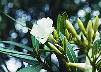 一支白色的花