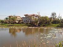 人工湖静水湖
