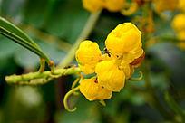 有蚂蚁的黄色花朵