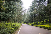 马路旁的茂密树林