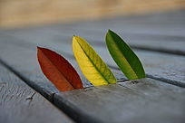 三片不同颜色的叶子