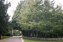 小路旁的茂密树林