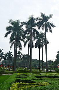 花园树木风光图片