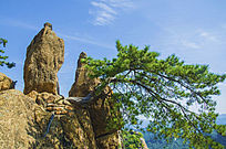千山无量观老子传道奇石松树