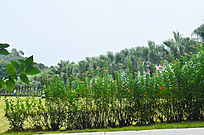 树林花木自然景色图片