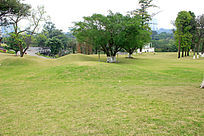 植物园草地