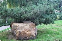松树与奇石