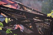 阳光下的蜻蜓