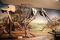 阳原县出土草原猛犸象的化石
