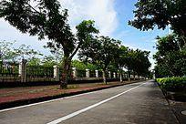 人行道绿化