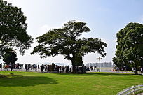 橘子洲头蓝天大树绿草坪风景图