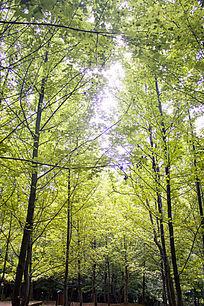 翠绿的树林