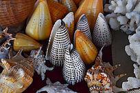 各式海螺手工艺品