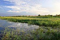 美丽的人工湿地风光