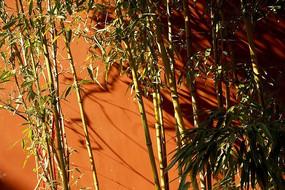 红色墙体前的竹子