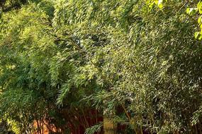 茂密的竹园