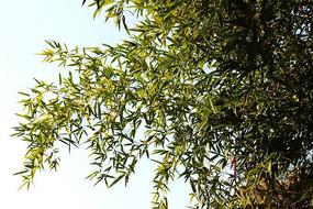青翠的竹子