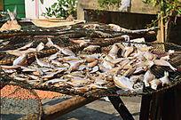 晒海鱼鱼干
