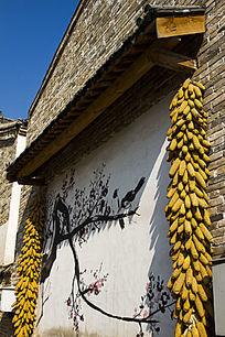 垂挂的玉米穗