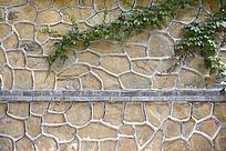 石墙上的爬墙虎