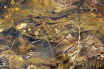 远古木化石截面