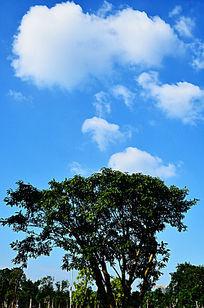 蓝天白云树木风光图片