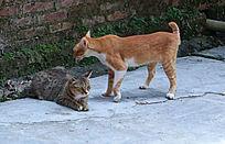 两只情侣猫