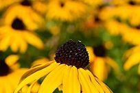 路边黄色的小野花