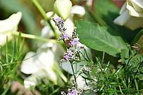 绿叶丛中紫色小花朵