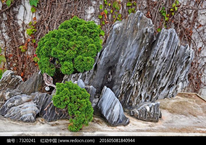 园艺景观石头黑松摆件造型艺术图片素材图片