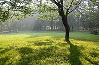 草地上的一棵树