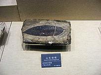 山旺胡桃化石标本