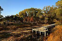 五颜六色的湿地公园风光